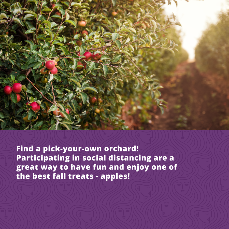 the structured introvert personality type can enjoy the fall season by going to an orchard and picking their own apples